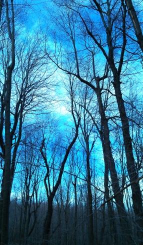 My Woods (smj)
